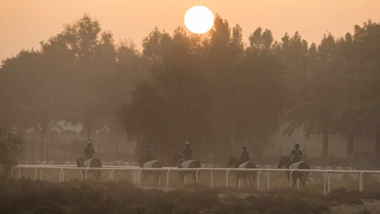 Hazy morning: locally trained horses make their way back to the stables as the sun begins to rise