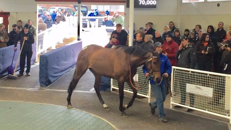 Lost Diamond: unraced filly was offered from the Godolphin draft