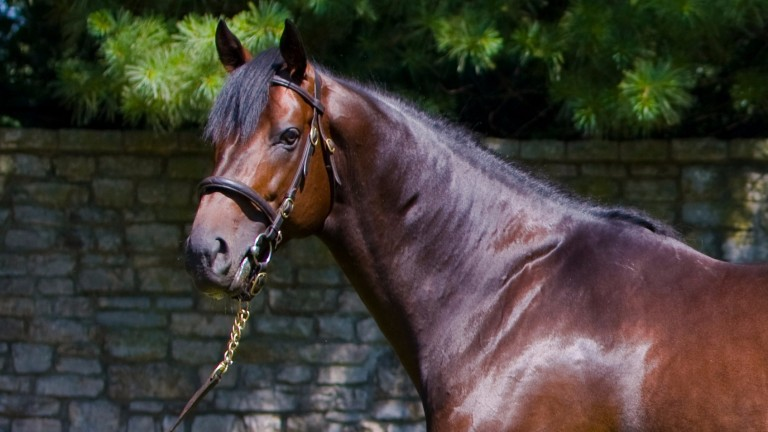 Scat Daddy: died suddenly at Ashford Stud in 2015