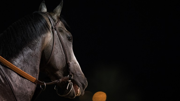 Arrogate: to be aimed at the Pacific Classic next month