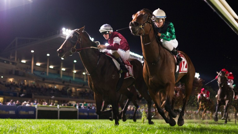 Moonee Valley in Australia stages spectacular turf races under floodlights