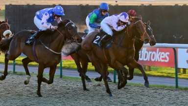 Royal Marskell (left): winner of the Betway Stayers Handicap at Lingfield on Saturday in action previously at the course