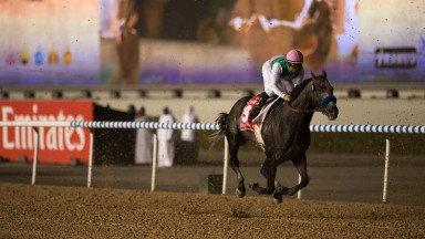 Superstar: Arrogate produces a remarkable performance to win the Dubai World Cup and enhance his status as the best horse on the planet