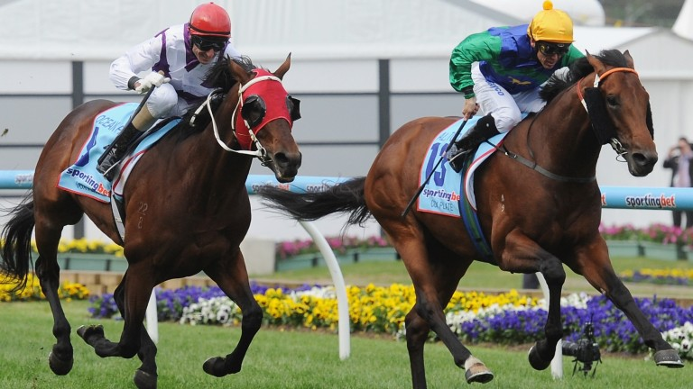 All Too Hard (right): son of Casino Prince stands at Vinery Stud