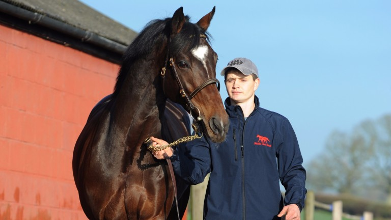 Telescope: Great Voltigeur and Hardwicke Stakes winner is standing his second season at Shade Oak Stud