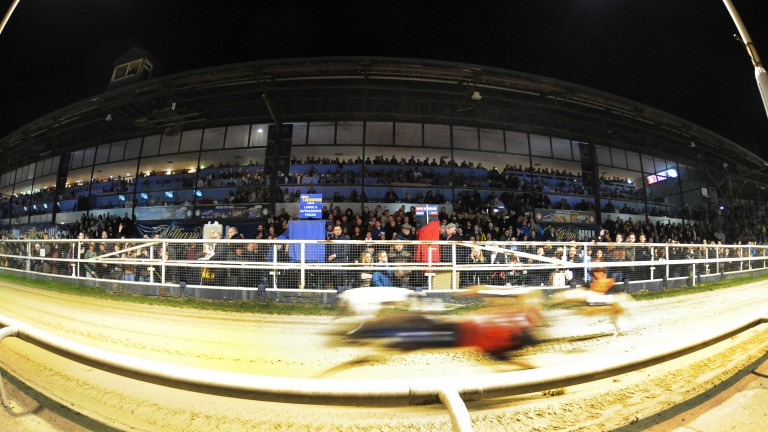 Speedballs: the greyhounds ping the traps and whizz past a packed grandstand