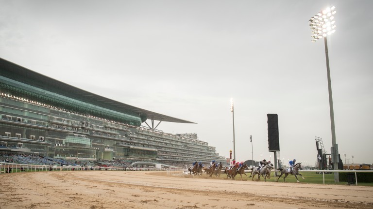 The field round the bend in the Kahayla ClassicDubai 25.3.17 Pic: Edward Whitaker