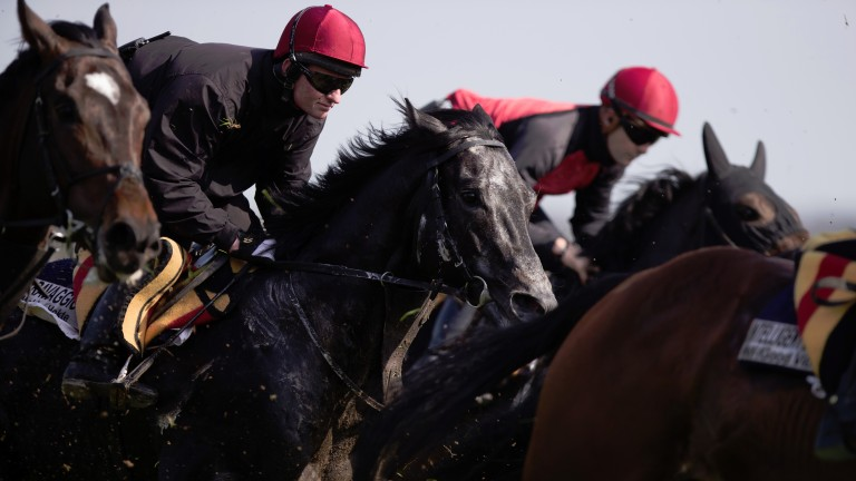 Caravaggio and Seamie Heffernan pictured in the pack.Naas.Photo:Patrick McCann 27.03.2017