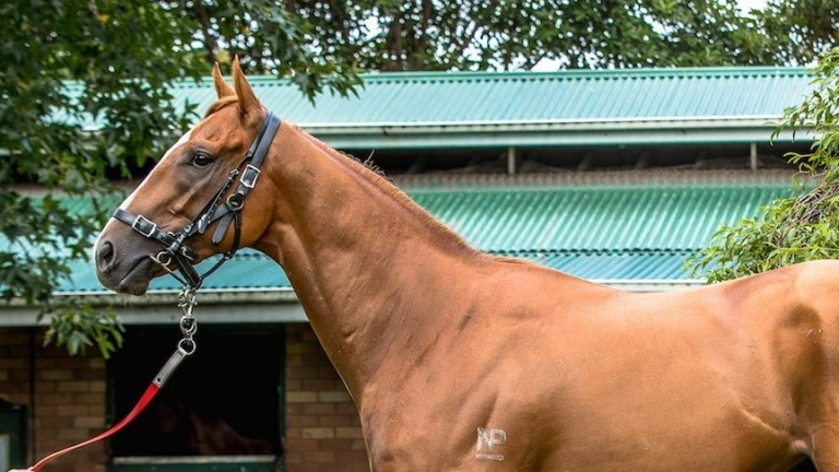 Gunnison: Group 2-winning son of Not A Single Doubt will continue his racing career in Hong Kong