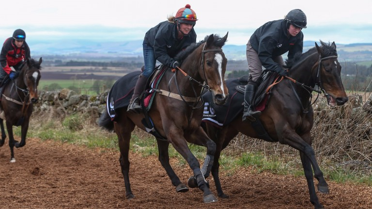 Grand National hope ONE FOR ARTHUR (ridden by Erin Walker) works with Quito Du Tressor (Leanne Williamson) at trainer Lucinda Russell's Arlary Stables in Milnathort 30/3/17Photograph by Grossick Racing Photography 0771 046 1723