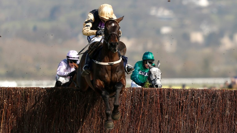 Black Hercules clears the last to win the JLT Novices' Chase at last year's Cheltenham Festival