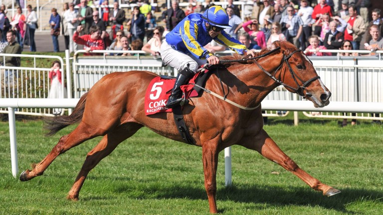 2015 winner Great Minds is back for more at Cork