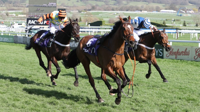 Might Bite (left) and Whisper fight out a dramatic finish to Cheltenham's RSA Chase, headed by a loose horse