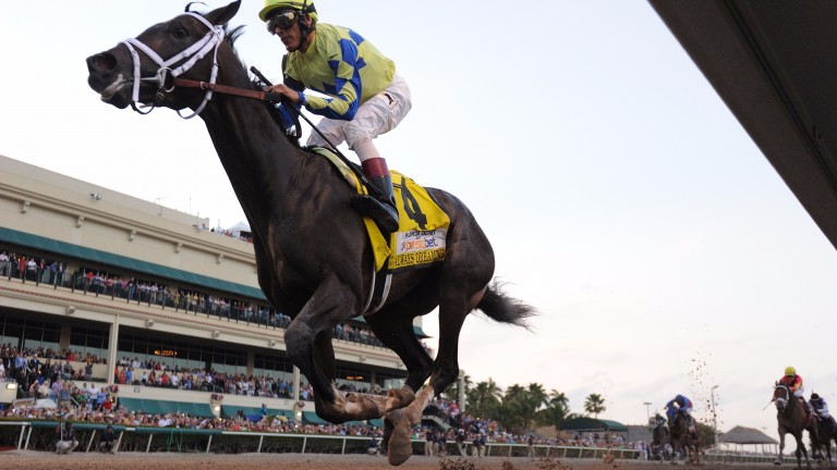 Always Dreaming's brilliant Florida Derby success puts him in line to avenge his sire's heroic defeat at Churchill Downs