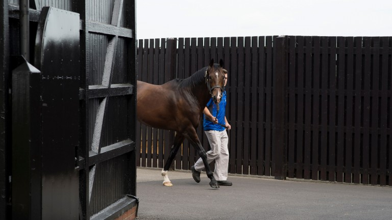 Fast Company: after Jet Setting's 1,000 Guineas win he joined the Darley roster at Kildangan