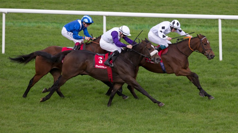 Downforce (right): will attempt to win the Cork Stakes for the second year running