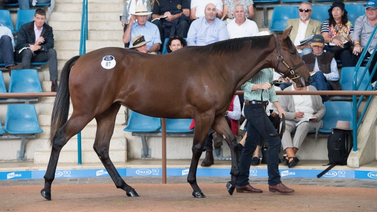 The A$1.8 million Redoute's Choice filly who topped the opening session of the Inglis Easter Yearling Sale
