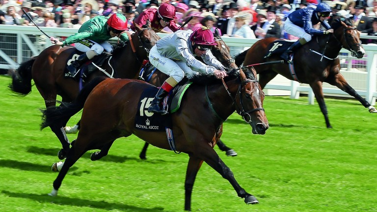 The Wow Signal: was bought at Ascot in 2014 for £50,000 by Sean Quinn