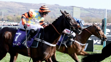 Might Bite (nearside) and Whisper locked together at the finish of the RSA Chase at Cheltenham last month