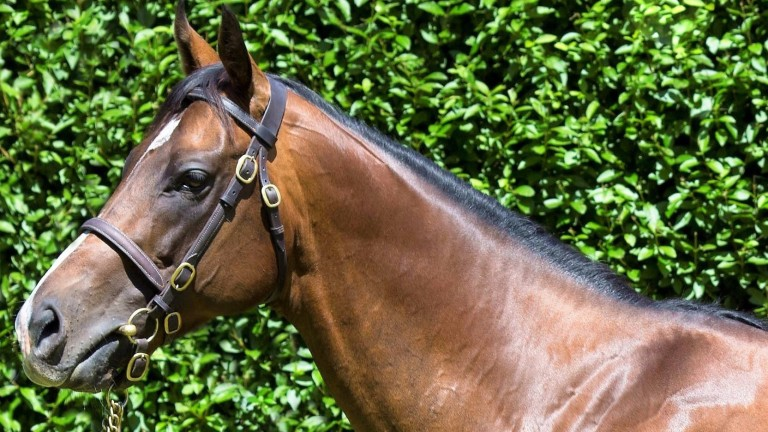 Cable Bay: son of Invincible Spirit has his first foals on the ground