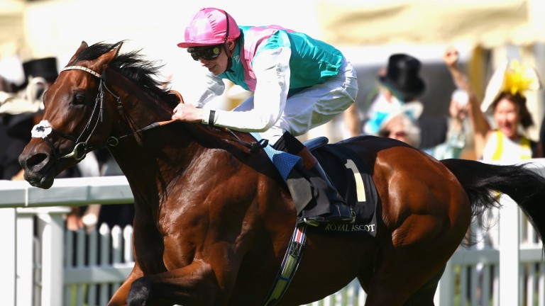 Kingman: his half-sister by Bated Breath is one to watch at Leicester