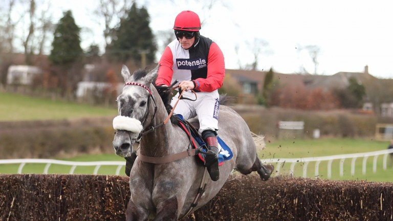 Saphir Du Rheu: finished fifth in the Gold Cup last year