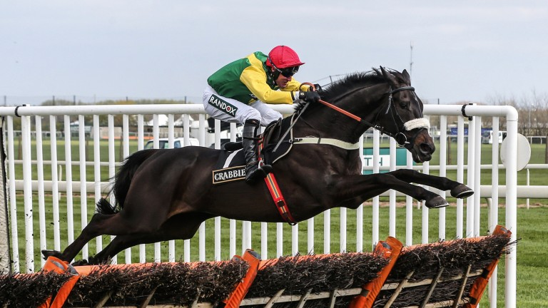 Pings the last: Pingshou soars over the last to kickstart a Colin Tizzard treble