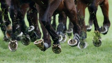 Panorama documentary: purports to shine an uncomfortable light on what happens to horses after their careers in racing are finished
