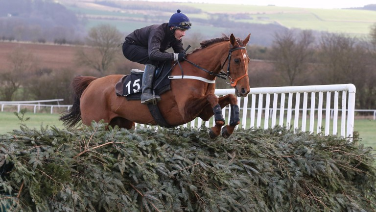 Definitly Red: due to be in action at Doncaster on Saturday