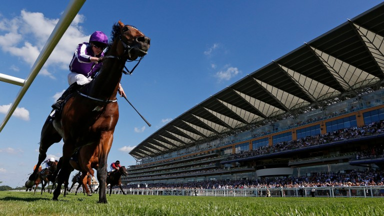 Highland Reel: a winner at Royal Ascot and HKIR