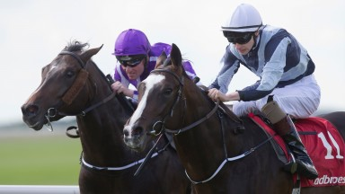 Yucatan: second in the Racing Post Trophy