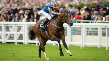Churchill: has won his last five and goes straight for the Qipco 2,000 Guineas at Newmarket