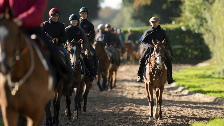 Andre Fabre returns with his string after exercise on Les Aigles, the gallops at Chantilly