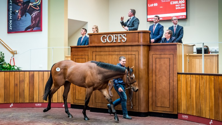 The Tally-Ho Stud Kodiac colt bought for a sale record of £360,000