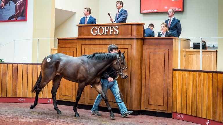 Justin Rea pinhooked this Lonhro colt for $17,000 at Keeneland