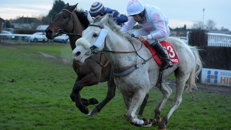 Russe Blanc: the only horse registered as 'white' with Weatherbys