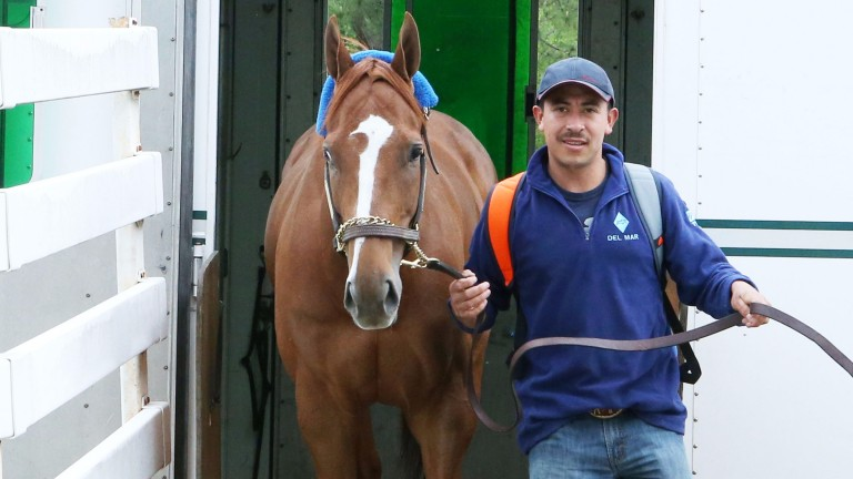 Stellar Wind arrives at Oaklawn Park in Arkansas to begin her five-year-old campaign in the Apple Blossom