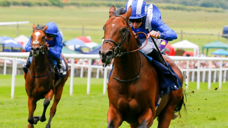 Taamol: Newmarket raider is among a host of promising three-year-olds in action