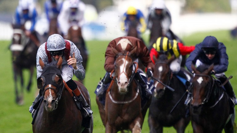 Big thrill: Swift and Top Notch Tonto finishing second in the Queen Elizabeth II Stakes