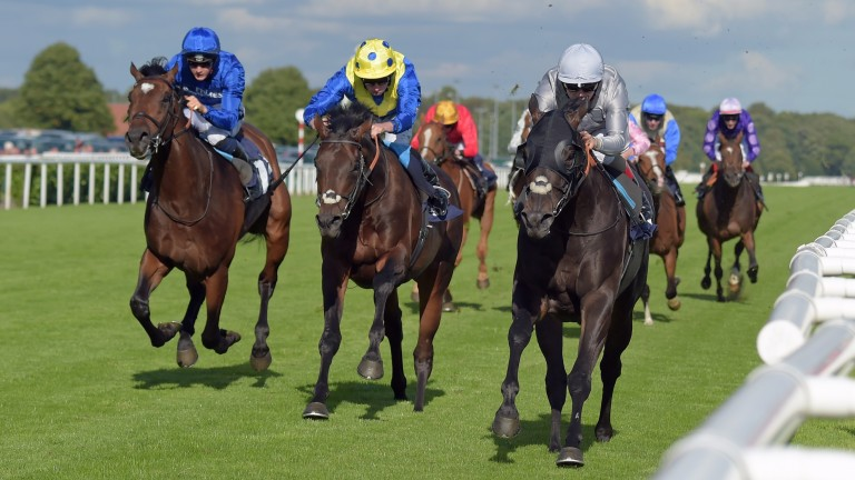Poet's Word (centre) bids to maintain Sir Michael Stoute's proud record in the Huxley Stakes