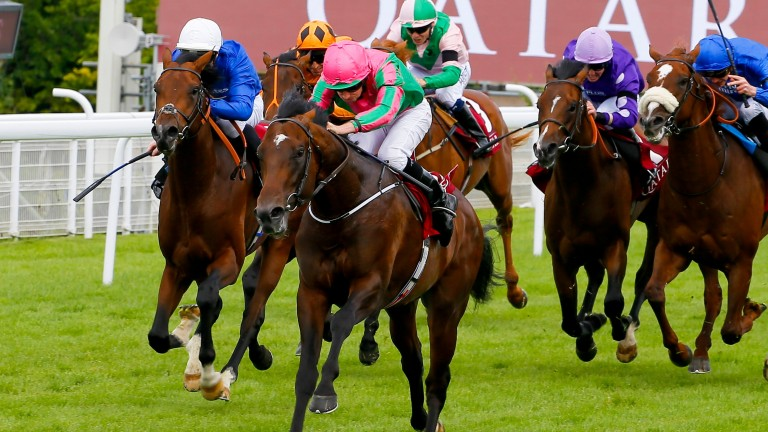 War Decree (middle): could begin his three-year-old campaign in the bet365 Craven Stakes