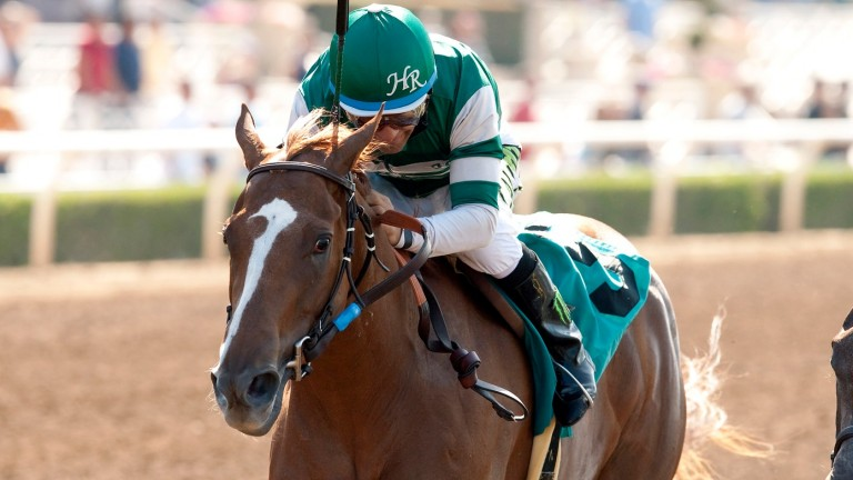 Stellar Wind: surprise return to training with Pegasus World Cup as target