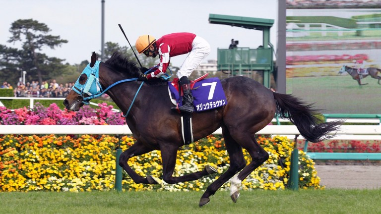 Oju Chosan: Japan's top jumps horse completed a six-timer with his second victory in Nakayama Grand Jump