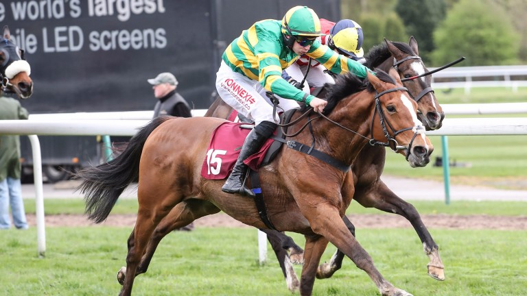 Stamp Your Feet: is progressing nicely and could outrun his price in this competitive event