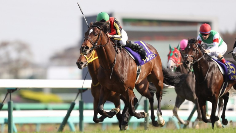 Al Ain: is by outstanding Japanese sire Deep Impact