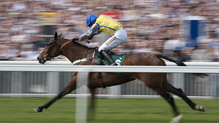 Former Cheltenham and Aintree winner Peddlers Cross is among the attractions at Middleham
