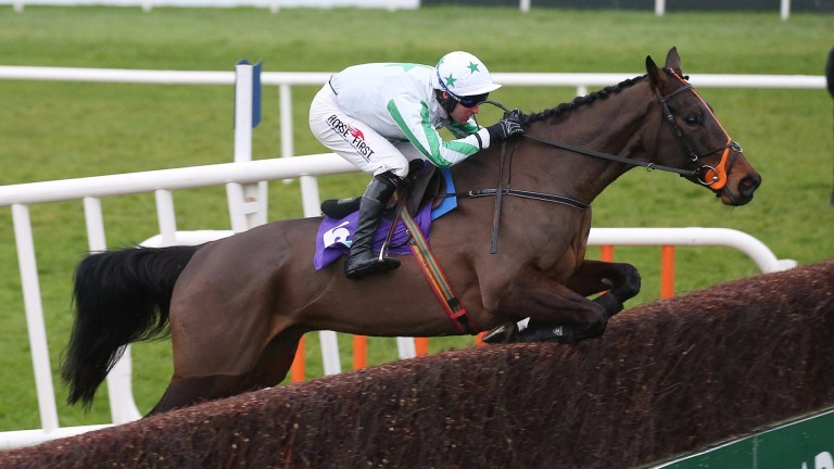 Our Duke: pushed out to 16-1 for the Cheltenham Gold Cup after Down Royal no-show