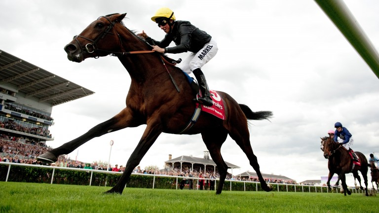 Masked Marvel: St Leger winner is out of Waldmark