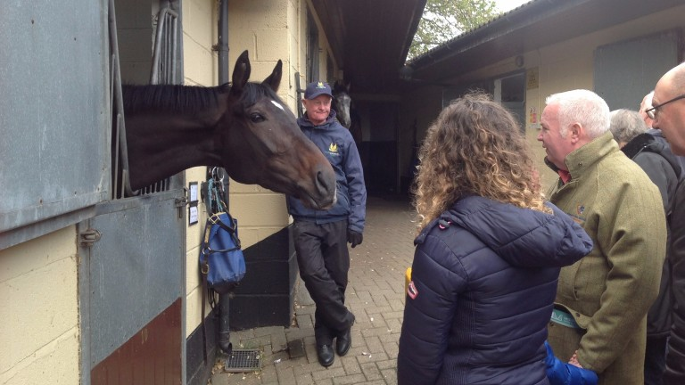 The three-year-old Think So meets his fans as the public visit Mark Johnston's yard on Middleham Open day