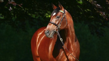 Frankel at Banstead Manor Stud. Free to use with credit: Asunción Piñeyrúa